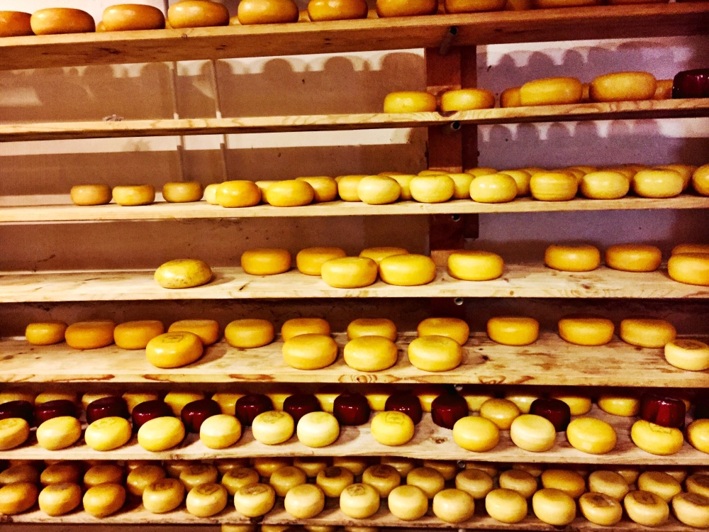 Cheese making factory, Amsterdam